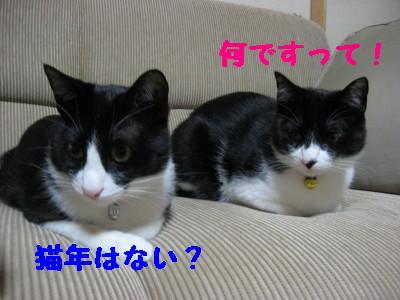 IMG_8365.jpg