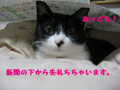 IMG_8481.jpg