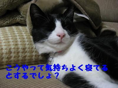 IMG_8668.jpg