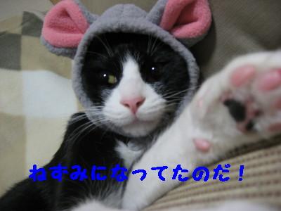IMG_8851.jpg