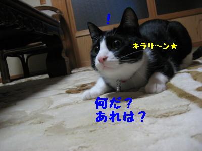 IMG_9021.jpg