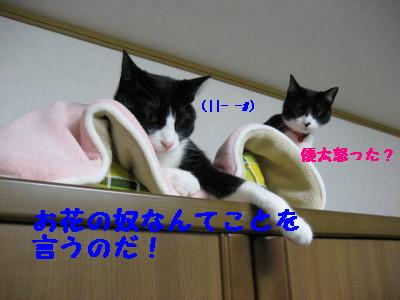 IMG_9392.jpg