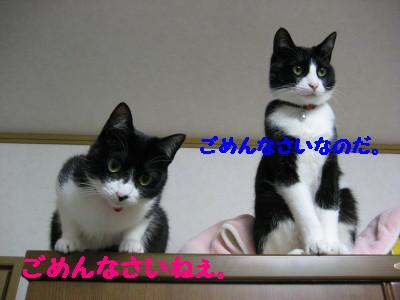 IMG_9576.jpg