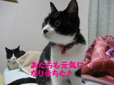 IMG_9894.jpg