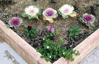 玄関脇の小さな花壇