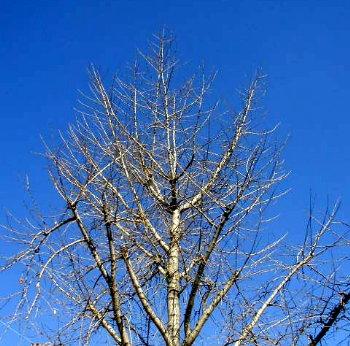 冬の青空がよく似合う