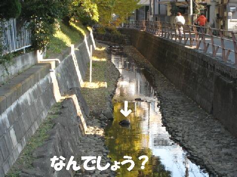IMG_0636-1.jpg