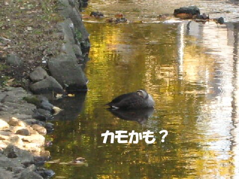 IMG_0637-1.jpg