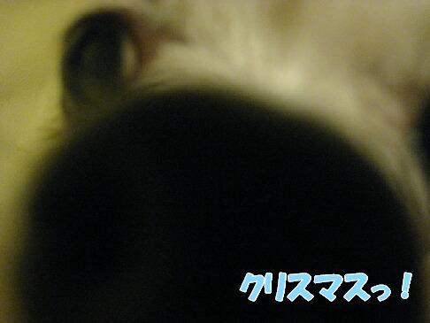 IMG_0667-1.jpg
