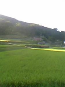 inaka02.jpg