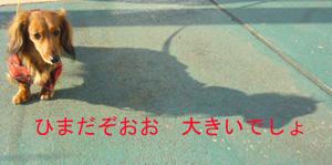 1-sho3.jpg