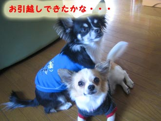 newyokanise2.jpg