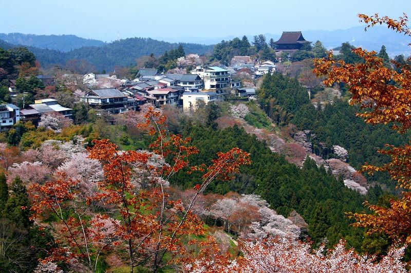 yoshino1a.jpg