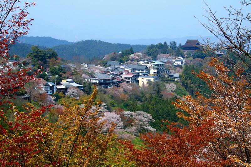 yoshino2.jpg