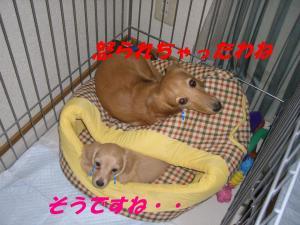 20061111142606.jpg