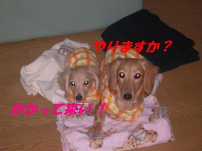 20061119001011.jpg