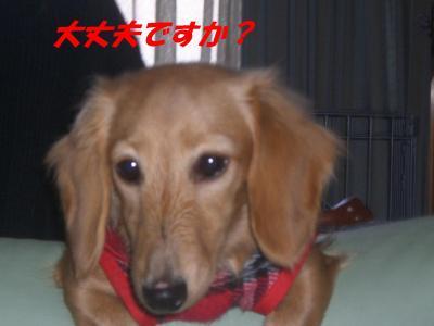 20061129173746.jpg