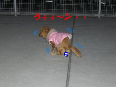 20061201233946.jpg