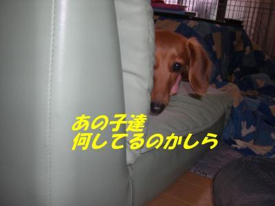 20061213173522.jpg