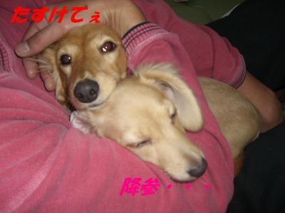20061217093815.jpg