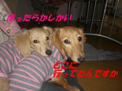 20070111223822.jpg