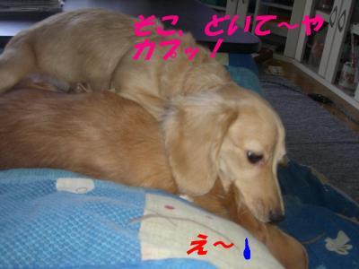 20070125144507.jpg