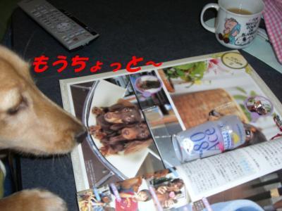 20070227161827.jpg