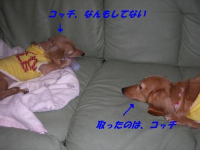 20070227162203.jpg