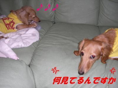 20070227164435.jpg