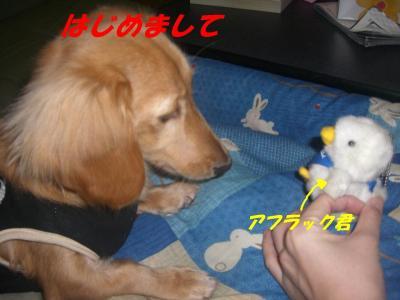 20070303204345.jpg