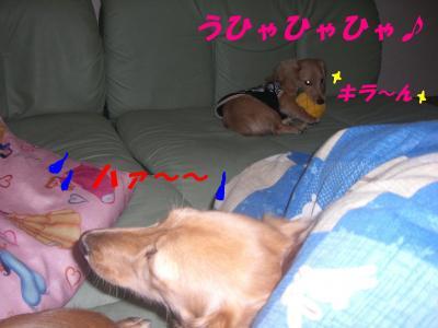 20070303205208.jpg