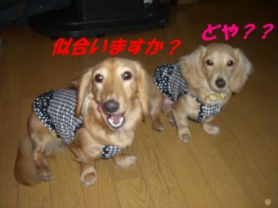 20070323172535.jpg