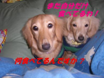 20070325103327.jpg