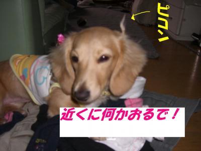 20070419163444.jpg