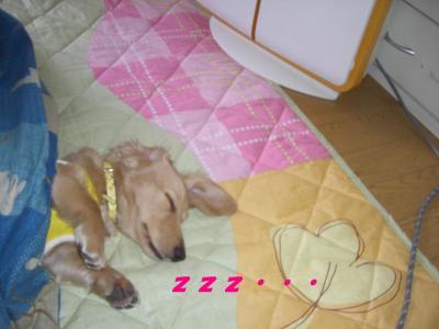 20070426182532.jpg