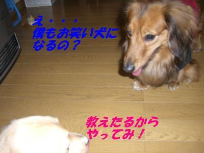 20070503224302.jpg