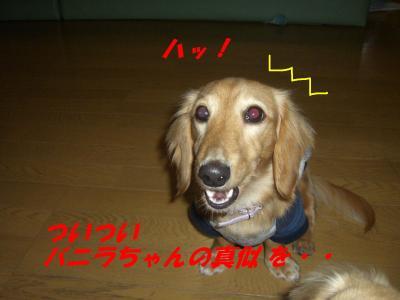 20070510155708.jpg