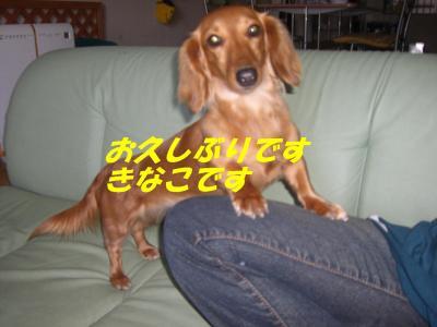 20070521181738.jpg