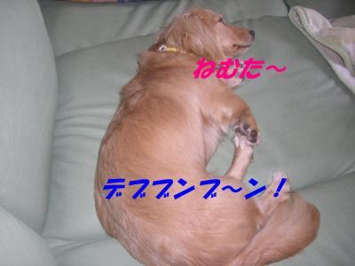 20070625204331.jpg