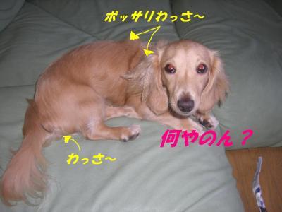 20070911154614.jpg