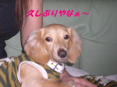 20071116163632.jpg