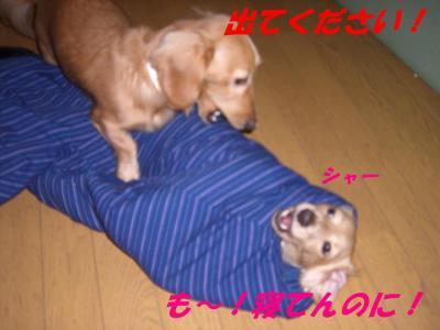 20071119171909.jpg