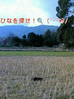 20070129132904.jpg