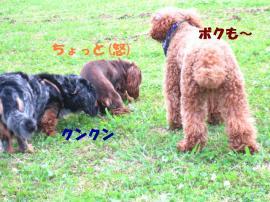 20070619150819.jpg
