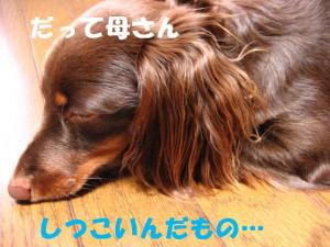 20070803181335.jpg