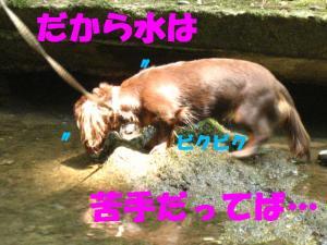 20070819004919.jpg