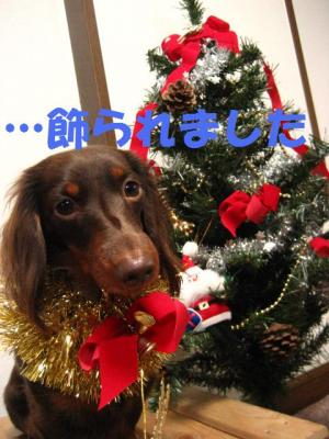 クリスマスひな