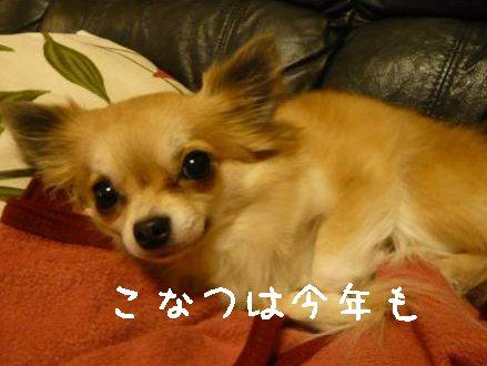 2008-01-05-01.jpg