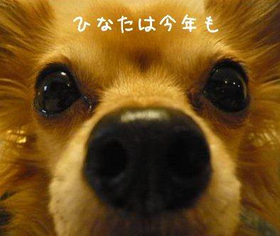 2008-01-05-03.jpg