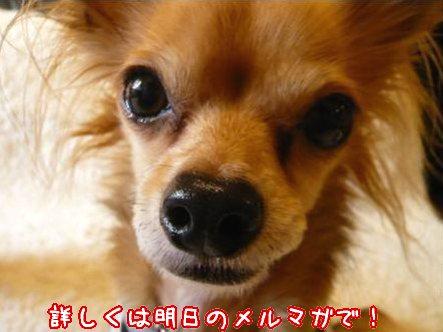 2008-01-06-04.jpg